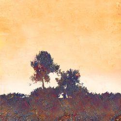 OG Pinos de Ibiza-Ibiza Pine Trees